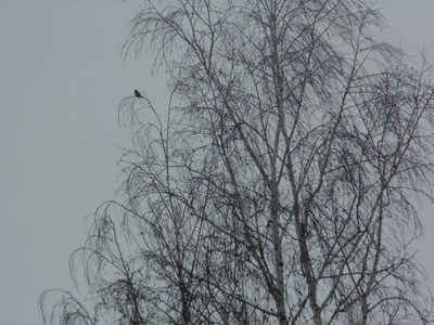 большой зимний учёт птиц в Сумской области